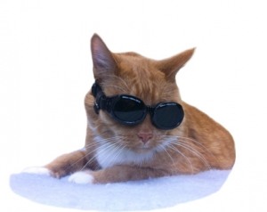 Elliot the cat enjoys laser therapy
