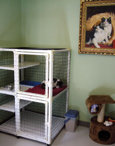 Cat Boarding Room