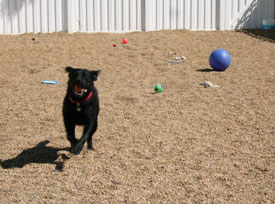 Our boarding facility play yard